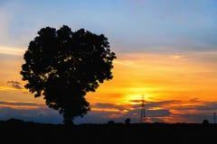 Profili l'albero ed il pilone dell'elettricità di alta tensione al sunse di tempo Immagine Stock