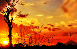 Profili l'erba alta lunga & il tramonto dell'albero di gomma Fotografie Stock Libere da Diritti