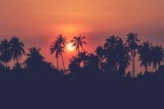 Foto della siluetta dei frutteti della noce di cocco al crepuscolo Fotografia Stock
