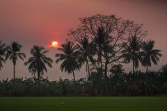 Profili la palma ed il fondo della natura dell'estate del tramonto Fotografia Stock