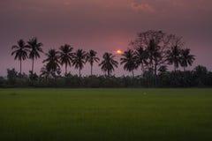 Profili la palma ed il fondo della natura dell'estate del tramonto Immagini Stock Libere da Diritti
