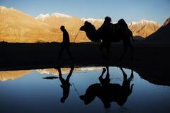 Profili la riflessione del cammello e nevichi valle Ladakh, India di Nubra della catena montuosa Fotografie Stock