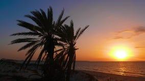 Profili le palme sul bello cielo del fondo mentre uguagliano il tramonto sopra il mare stock footage