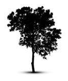 Profili una siluetta dell'albero isolata sul clippi bianco del fondo Fotografie Stock Libere da Diritti
