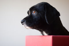 Profil-Hundeporträt Stockfotos
