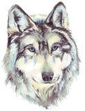 Profilo capo del lupo Fotografie Stock Libere da Diritti