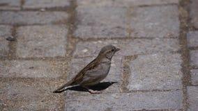 Profilo degli uccelli Fotografia Stock Libera da Diritti