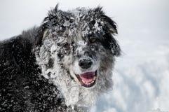 Profilo del cane Fotografie Stock Libere da Diritti