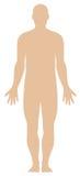 Profilo del corpo umano Fotografia Stock Libera da Diritti
