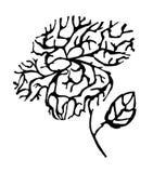 Profilo del fiore Immagine Stock Libera da Diritti
