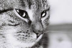 Profilo del gatto Fotografia Stock Libera da Diritti