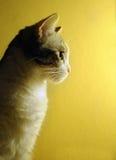 Profilo del gatto Immagine Stock