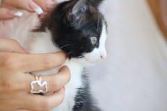 Profilo del gatto Immagine Stock Libera da Diritti