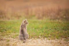 Profilo del gatto dell'azienda agricola Immagini Stock Libere da Diritti