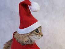 Profilo del gatto di natale Fotografie Stock