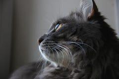 Profilo del gatto sveglio Fotografia Stock
