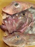 Profilo del pesce Fotografia Stock