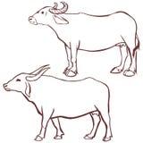 Profilo della mucca della Buffalo Fotografie Stock