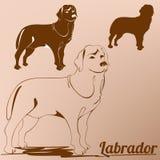 Profilo della siluetta di labrador retriever del cane Immagine Stock Libera da Diritti