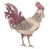 Profilo dello schizzo del gallo Fotografia Stock