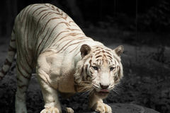 Profilo di un cacciatore naturale Fotografie Stock Libere da Diritti