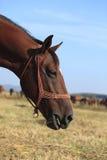 Profilo di un cavallo fotografia stock libera da diritti