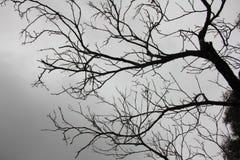 Profilo di un ramo di albero sterile Fotografia Stock