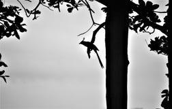 Profilo di un uccello su un ramo Fotografia Stock