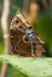 Profilo di una farfalla Fotografia Stock