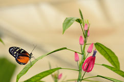 Profilo di una farfalla su una foglia Immagini Stock