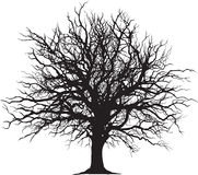 Profilo nero dell'albero Fotografia Stock
