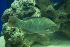 Profilo tropicale del lato dei pesci Immagini Stock Libere da Diritti