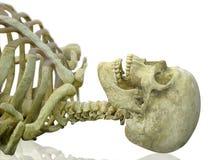 Profilo umano del cranio Fotografia Stock