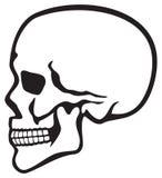 Cranio Fotografie Stock Libere da Diritti