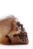 profilowa istoty ludzkiej czaszka Obrazy Royalty Free