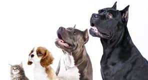 Profils de chien sur le fond blanc Photographie stock