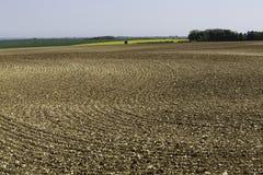 Profils onduleux dans le sol dans le domaine arable photos stock