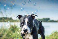 Profilstående av en hund royaltyfri fotografi