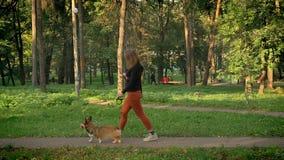 Profilståenden av den unga kvinnan som går med den gulliga corgy hunden på en koppel i gräsplan, parkerar stock video