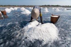 Profissão de sal em Vietname Imagem de Stock