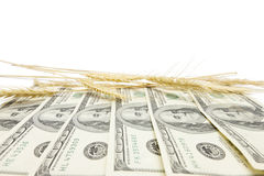 Profit from harvest background Stock Images