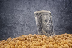 Profit from soybean cultivation Stock Photos
