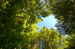 Profondément dans la forêt Images stock