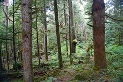Profondément dans la forêt images libres de droits