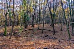 Profondément dans la forêt colorée d'automne en novembre, Bratislava, Slovaquie photos stock