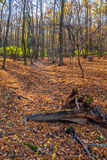 Profondément dans la forêt colorée d'automne en novembre, Bratislava, Slovaquie images stock