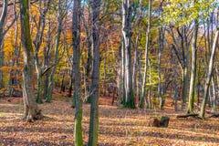 Profondément dans la forêt colorée d'automne en novembre, Bratislava, Slovaquie images libres de droits