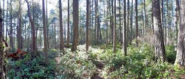 Profondément dans la forêt d'île de Vancouver image libre de droits