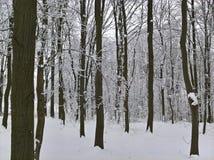 Profondément dans la forêt d'hiver Photos stock