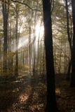 Profondément dans la forêt dans les montagnes photo stock